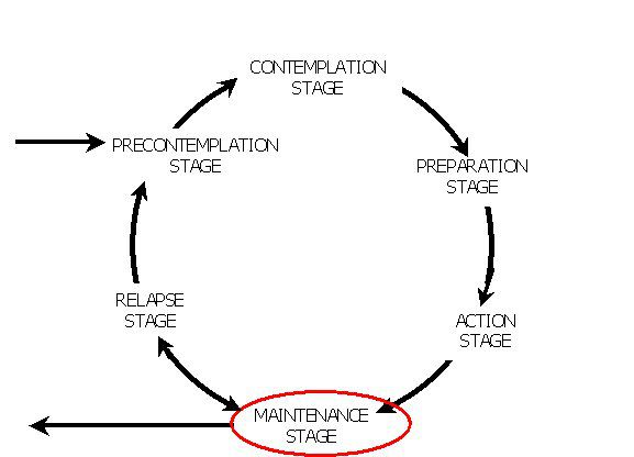 Diagram showing the maintenance stage in the model
