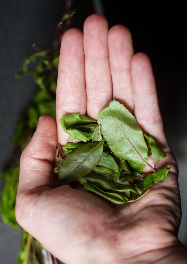 Hand holding khat leaves