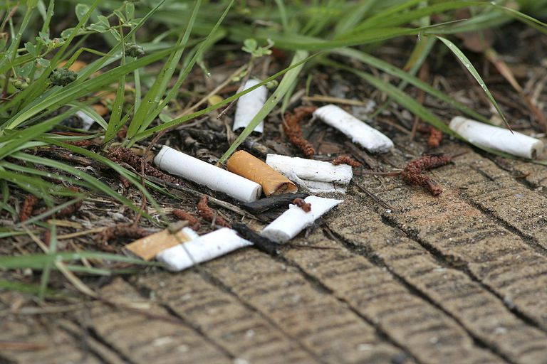 Cigarette butts in the grass on the edge of a sidewalk