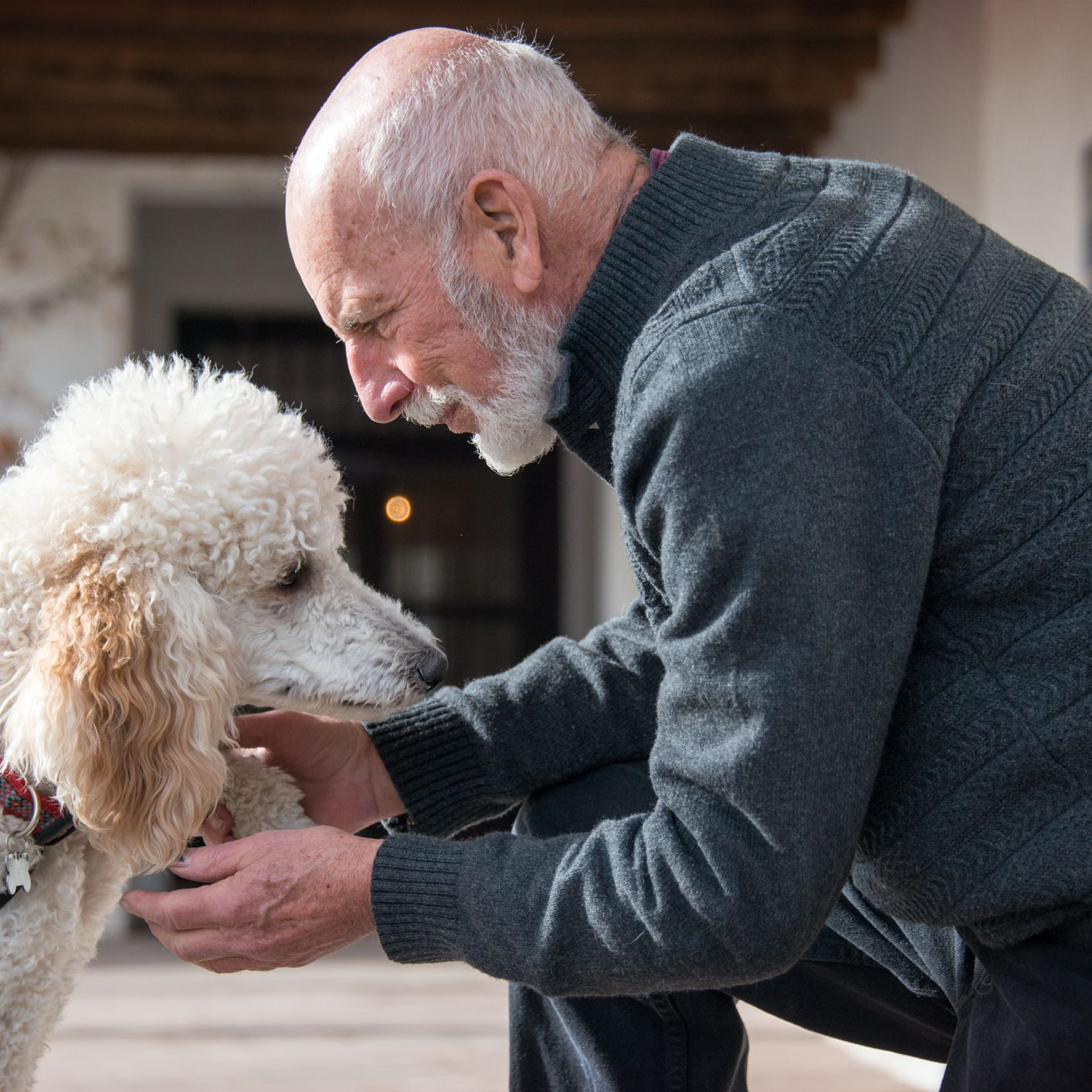 Therapy Dogs to Improve Mental and Physical Health