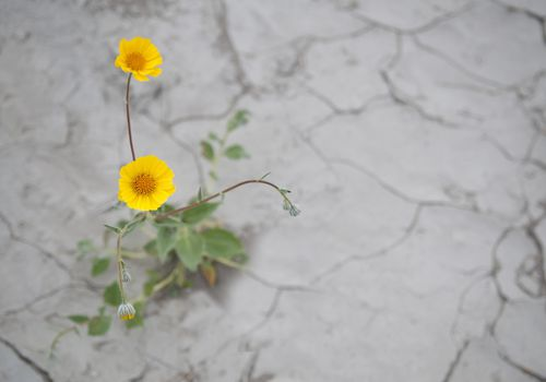Flowers growing in pavement can signify resilience.