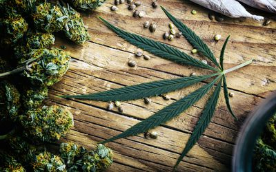 Marijuana plant still life
