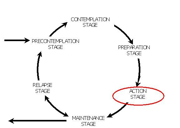 Diagram showing the action stage in the model