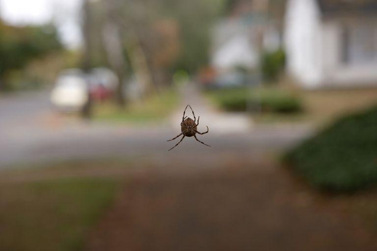 Spider, close up