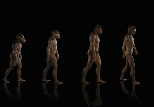 Illustration of human evolution, chimpanzee to human form