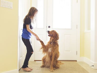 woman shaking the paw of a golden retriever
