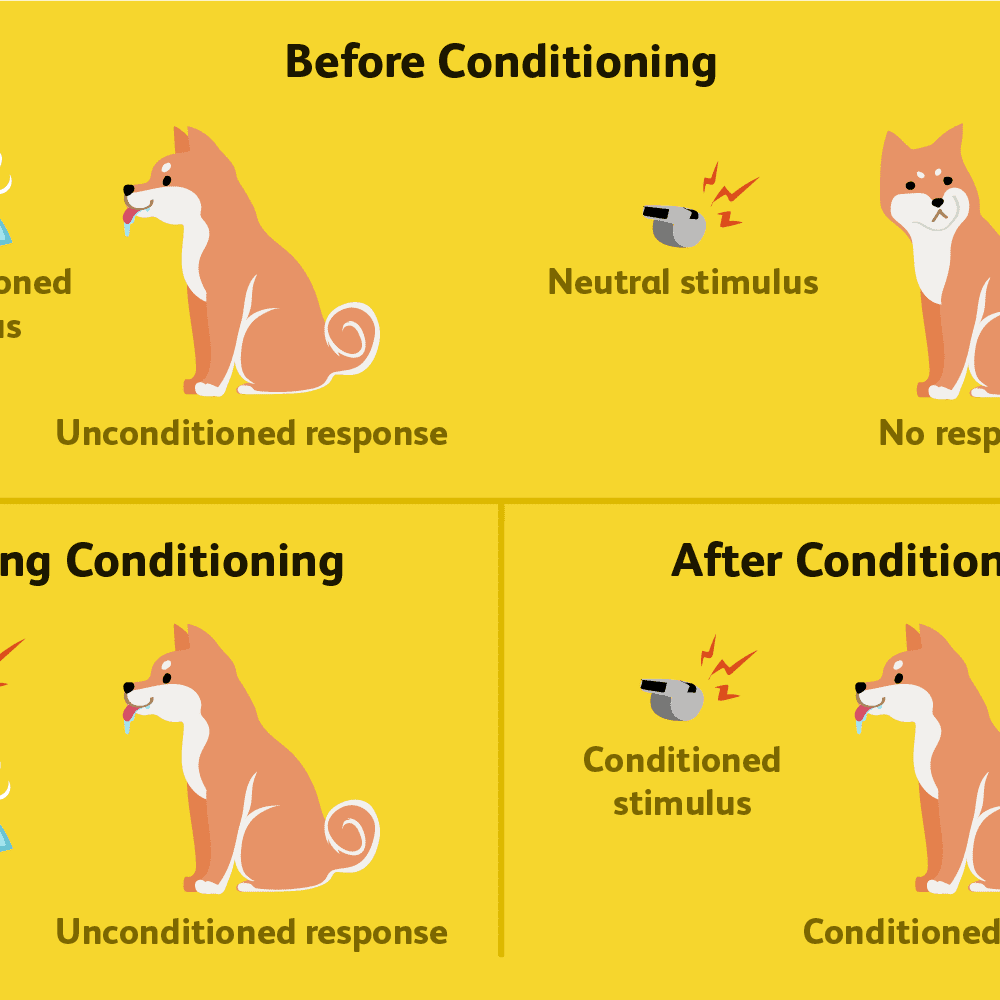 Classical Conditioning: How It Works With Examples