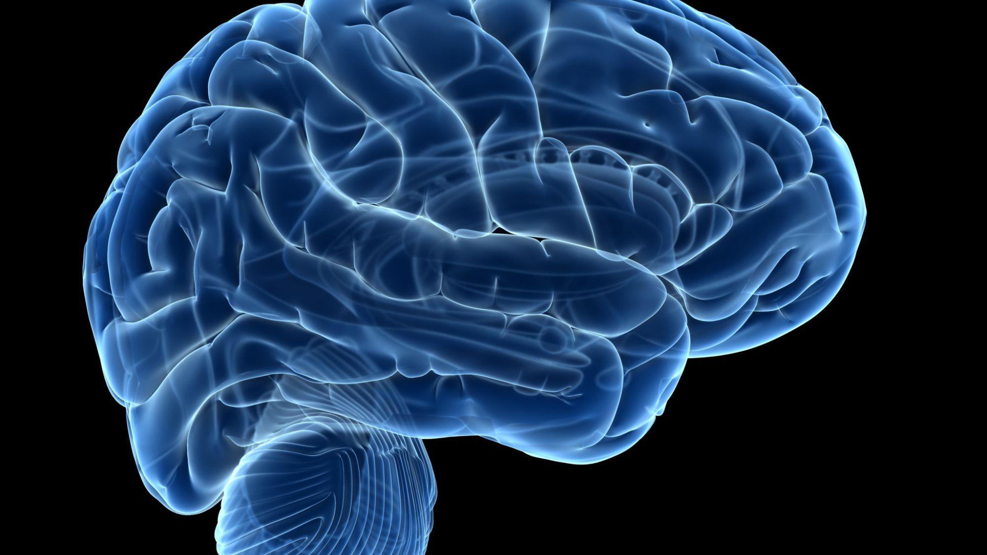 Marine Study Examines Stress Brain >> 5 Brain Exercises To Strengthen Your Mind